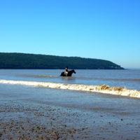 Horse at Sand Bay, Somerset