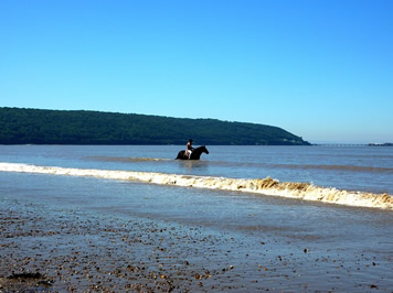 Horse at Sand Bay, Somerset